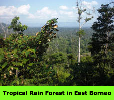 Tropical Rain Forest in East Borneo